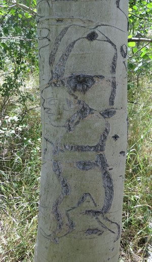 Arborglyph by sheep herders of a boxer in an aspen tree
