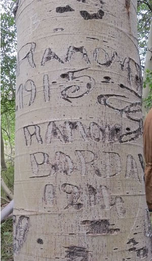 Arborglyph of the name Ramon in an aspen tree